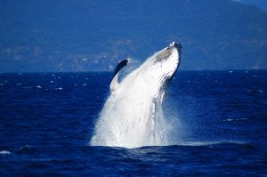 Cairns Whale watching cruise