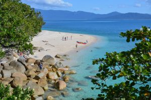 Cairns Whale Watching cruise plus Fitzroy Island